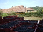 Nebbiolo from 2009 harvest